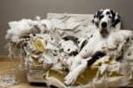 Hundehaftpflicht Online Vergleich