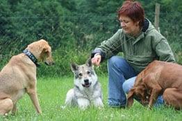 Betriebshaftpflichtversicherung für Hundschule