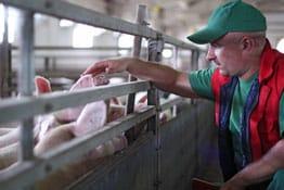 Landwirtschaft Versicherung: Welche Versicherungen benötigen Landwirte?