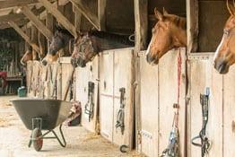 Betriebshaftpflichtversicherung Pferdepension