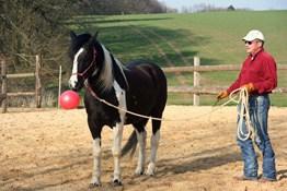 Berufsunfähigkeit Pferdewirt