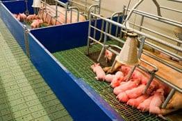 Landwirtschaftliche Ertragsschadenversicherung