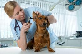 Berufsunfähigkeit Tierarzt