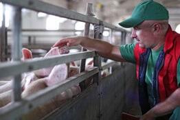 Berufsunfähigkeit Tierwirt